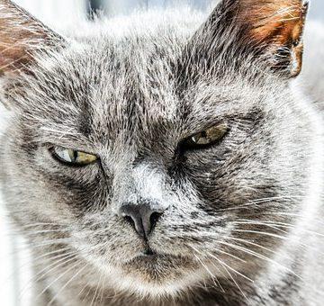 Como es Piscis cuando se enoja